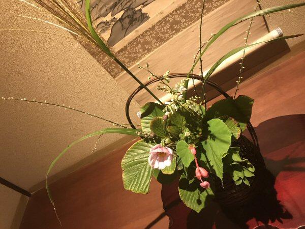 9月16日今日のお花。