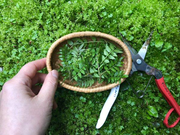 朝の摘み草の時間。
