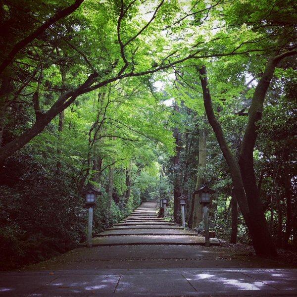 白山比咩神社様表参道が見える部屋。